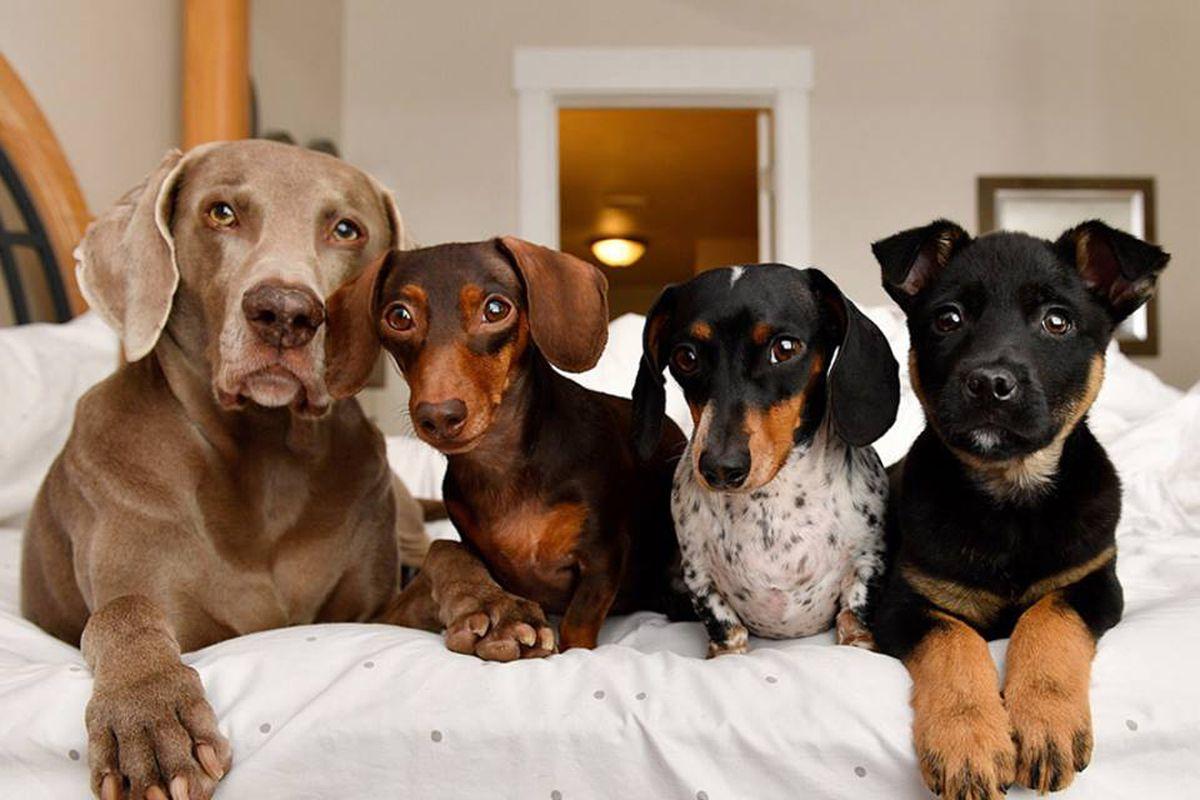مشاهير الحيوانات الأليفة .. 4 أسباب لتعمل شركتك معهم