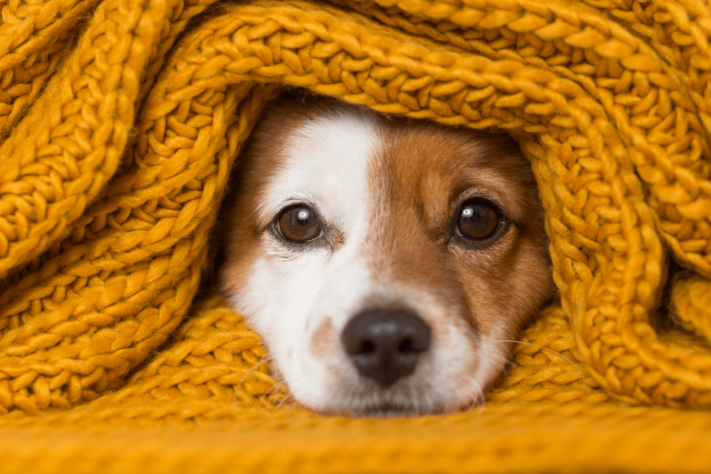كيف تحصل على لقطات جيدة لحيوانك الأليف؟